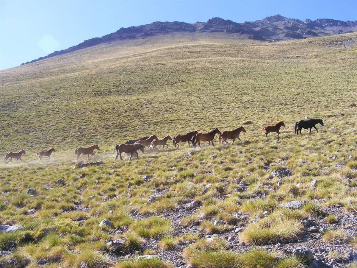 Trekking dans les Andes.jpg
