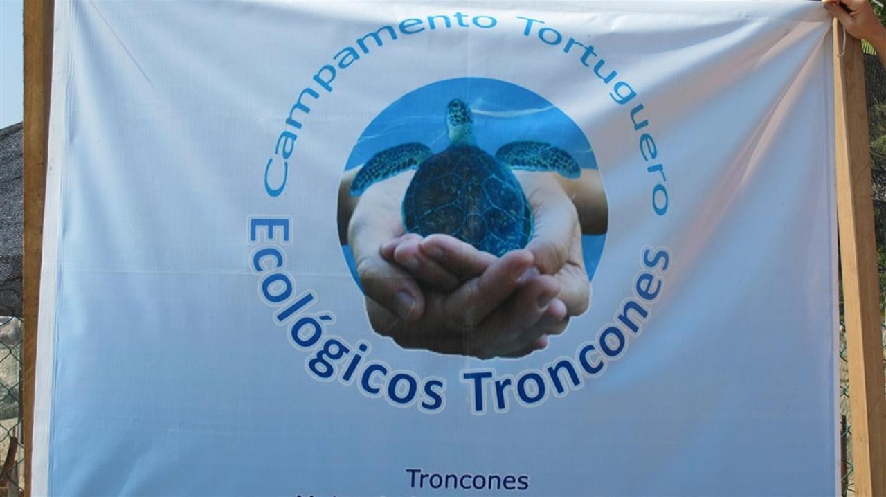 Tortuga de mar de Roberto's Bistro Sanctuary.jpg