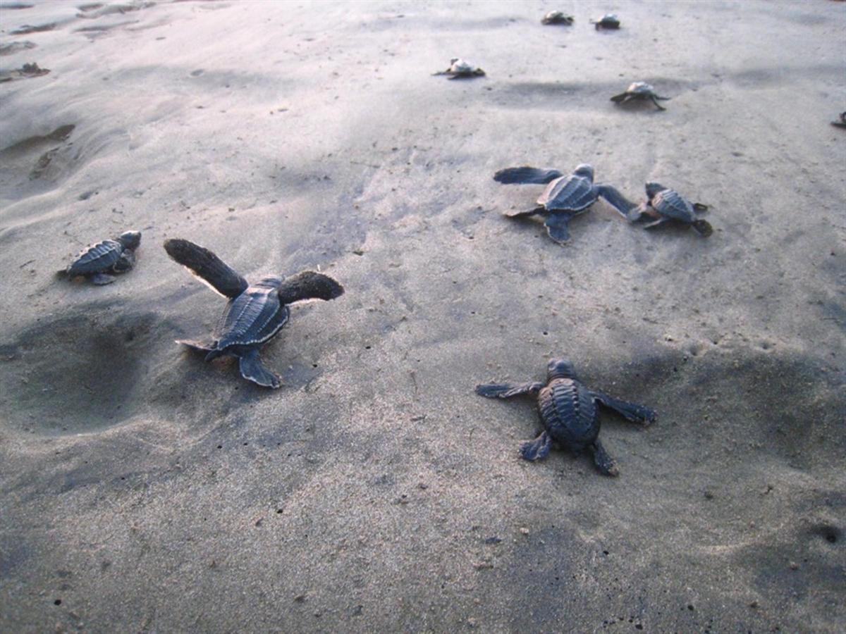 Roberto Bistro Sea Turtle Sanctuary.jpg