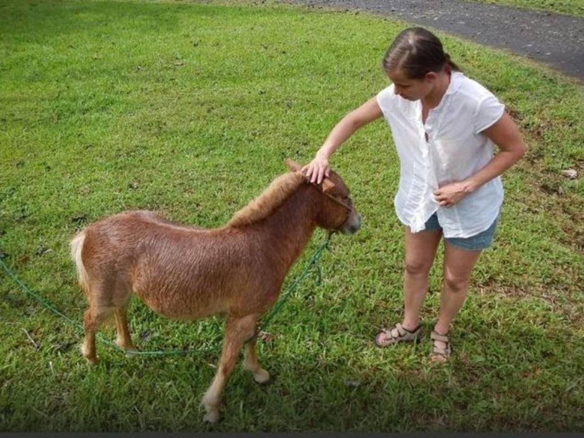 Miniature Horse & Donkeys