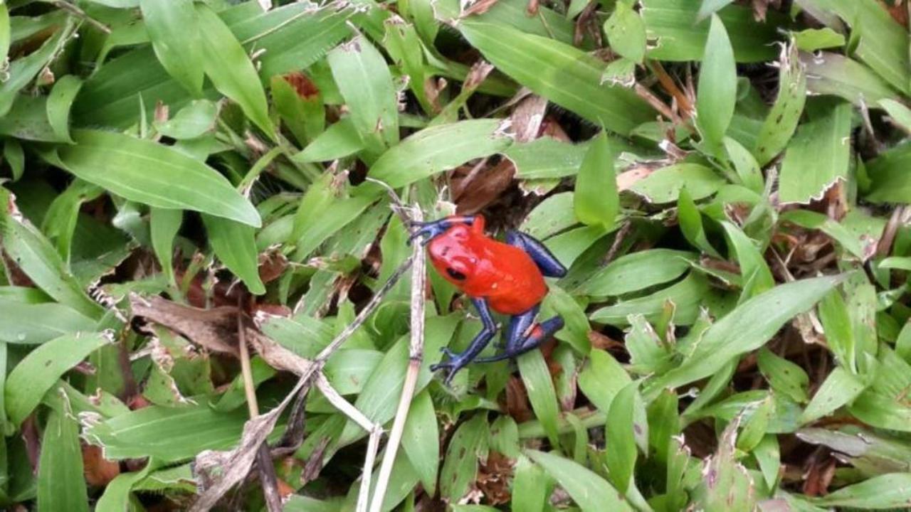Flora y Fauna, Alajuela, Costa Rica