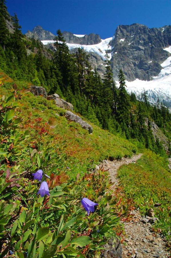 North Cascades Mountain Meadow.jpg