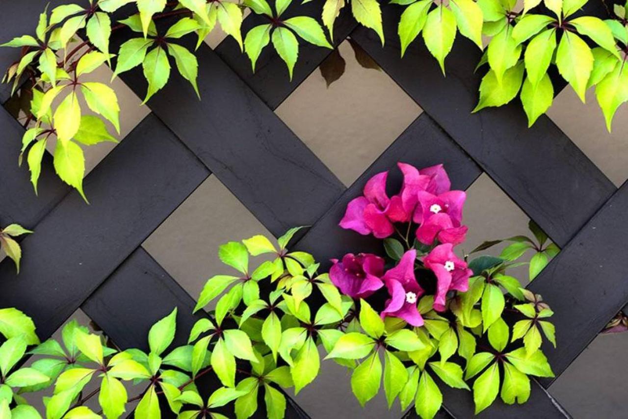 Flowers, Cabo Vista Hotel, Extended Stay Inn, Cabo San Lucas, Baja, Mexico.jpg