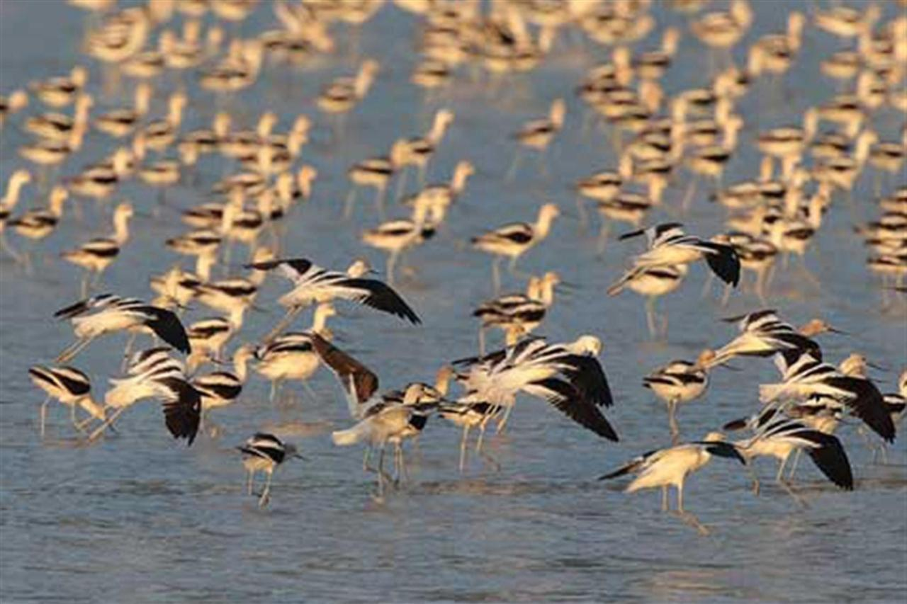 Birds Lagoon of Sayula, Explora Sayula, Gran Casa Sayula Hotel Gallery & SPA, Sayula, Mexico.jpg