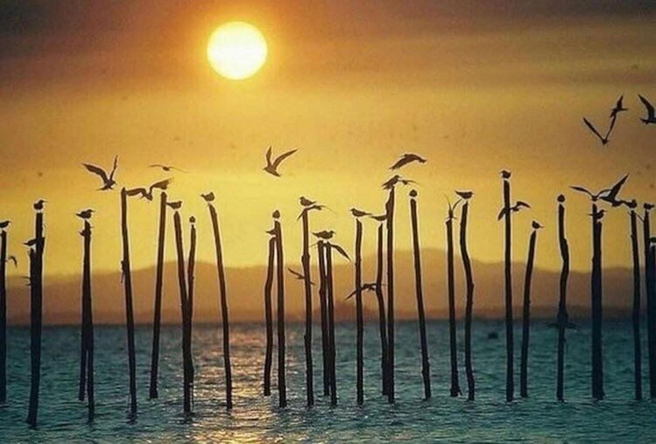 Pôr do Sol Praia Ponta do Mutá.JPG