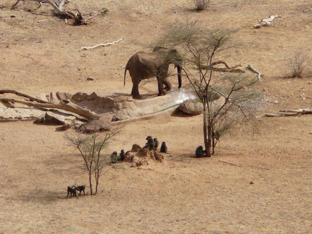 Elephant at Samburu waterhole.jpg