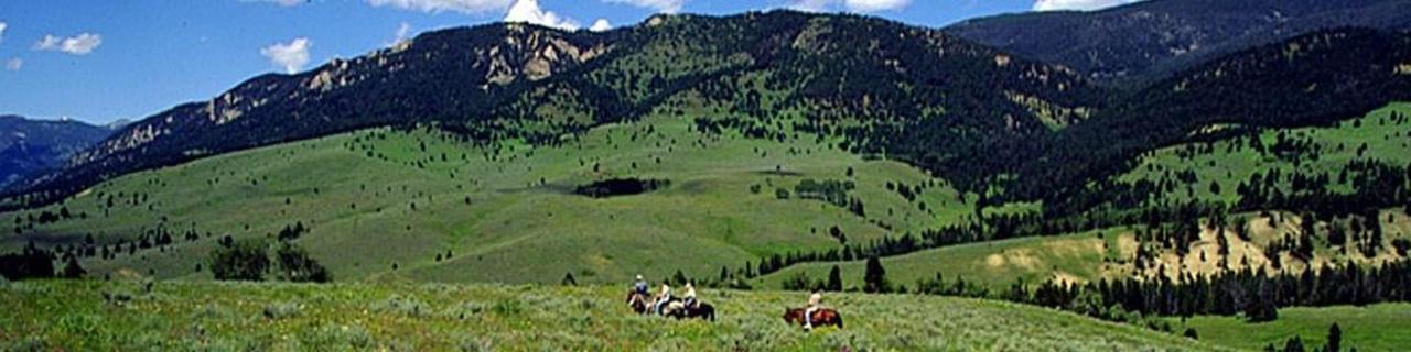 banner-photo-horseriding.jpg.1920x0.jpg