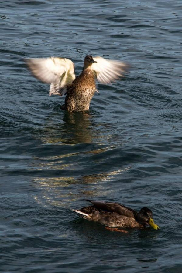 ducks-on-water.jpg.1024x0.jpg
