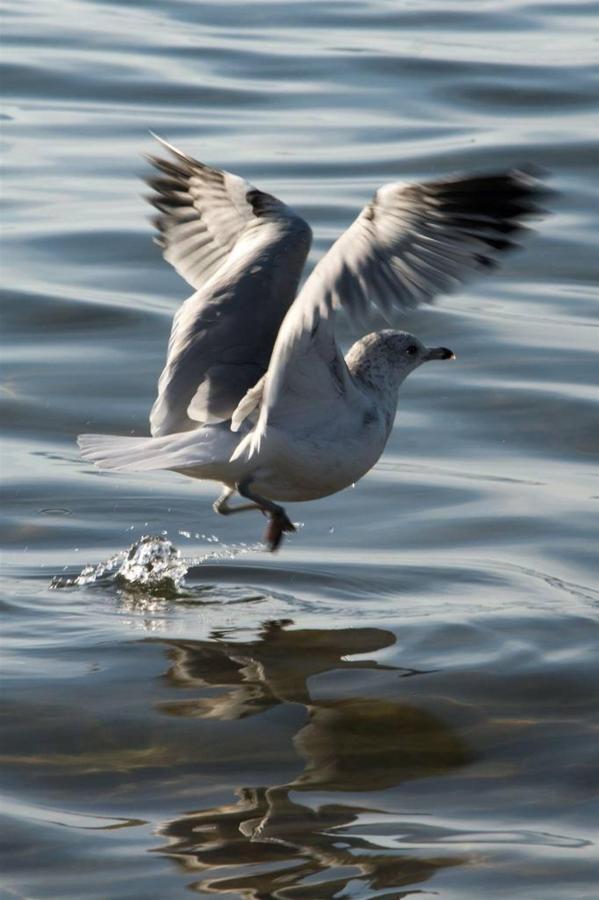 seagull.jpg.1024x0.jpg