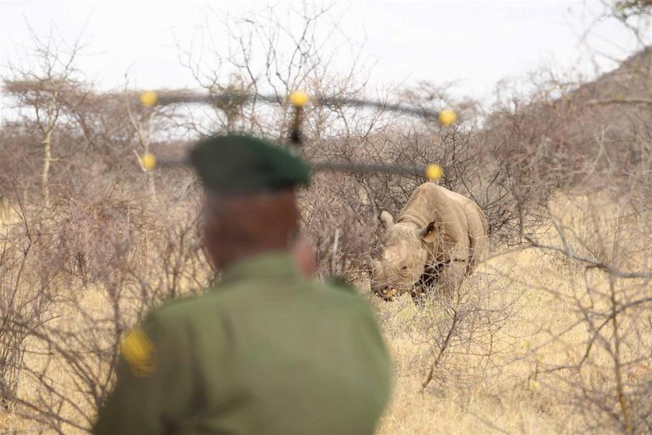Sera ranger with transmitter and rhino.jpg