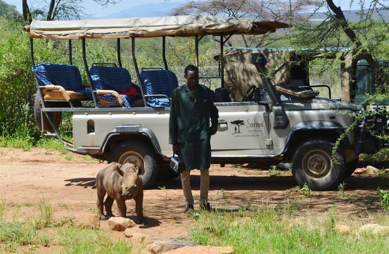 Loijupu abandoned rhino and his carer talking a walk.jpg