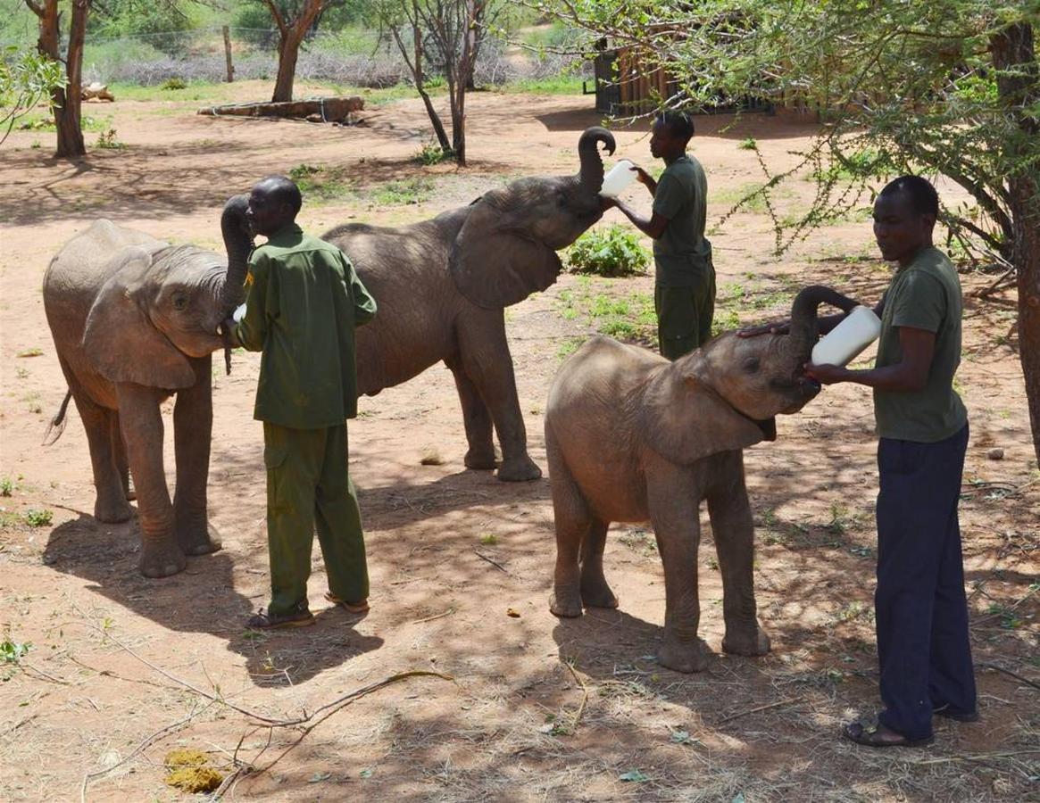 Milking time for baby ele orphans.jpg