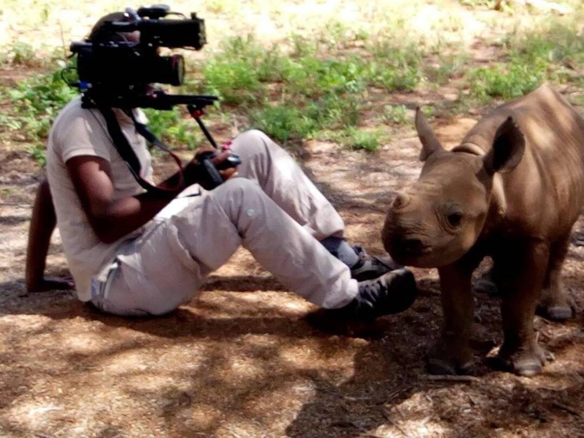 Up close and personal with Loijupu rhino calf.jpg