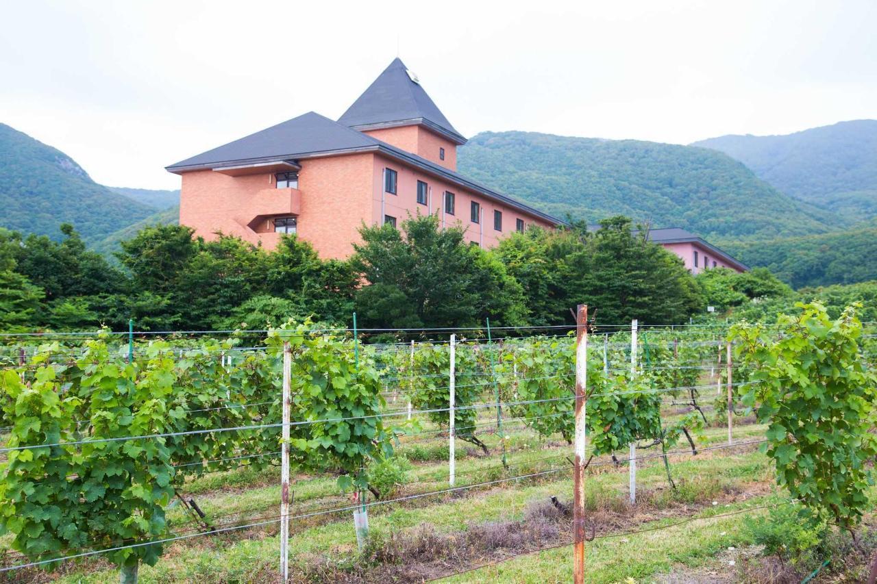 ホテル周辺にはワイン用のぶどう畑も。