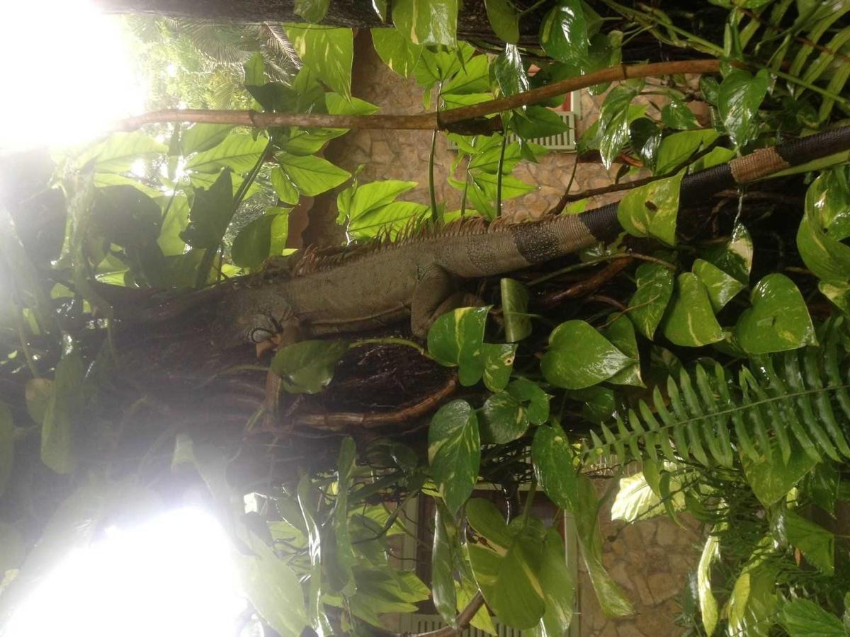 Property12 Iguana en un árbol de Almendro en Hotel Apastepe