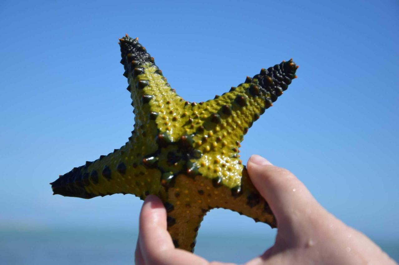 Étoile de mer