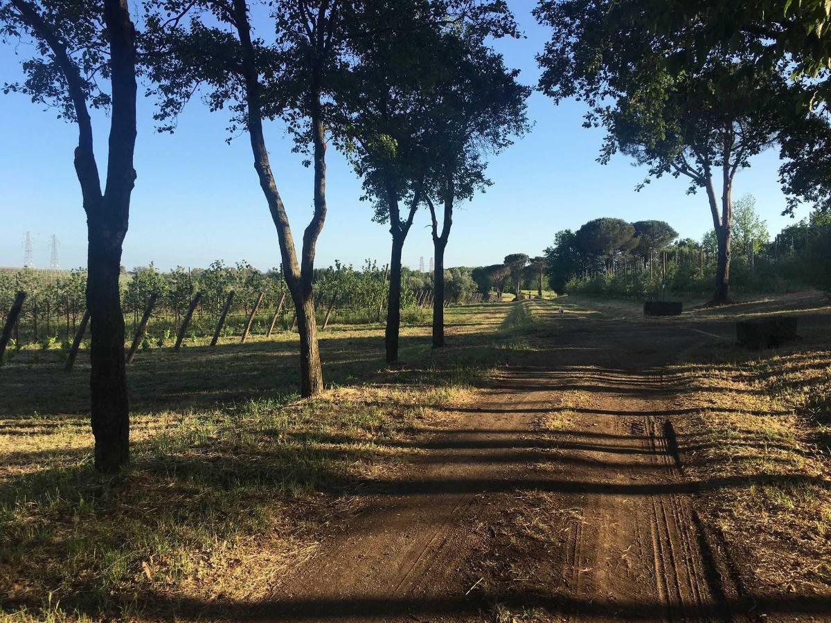 Agribel Azienda Agricola
