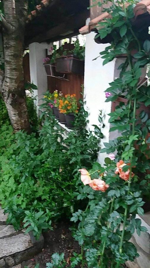 Нашата градина.Our garden.