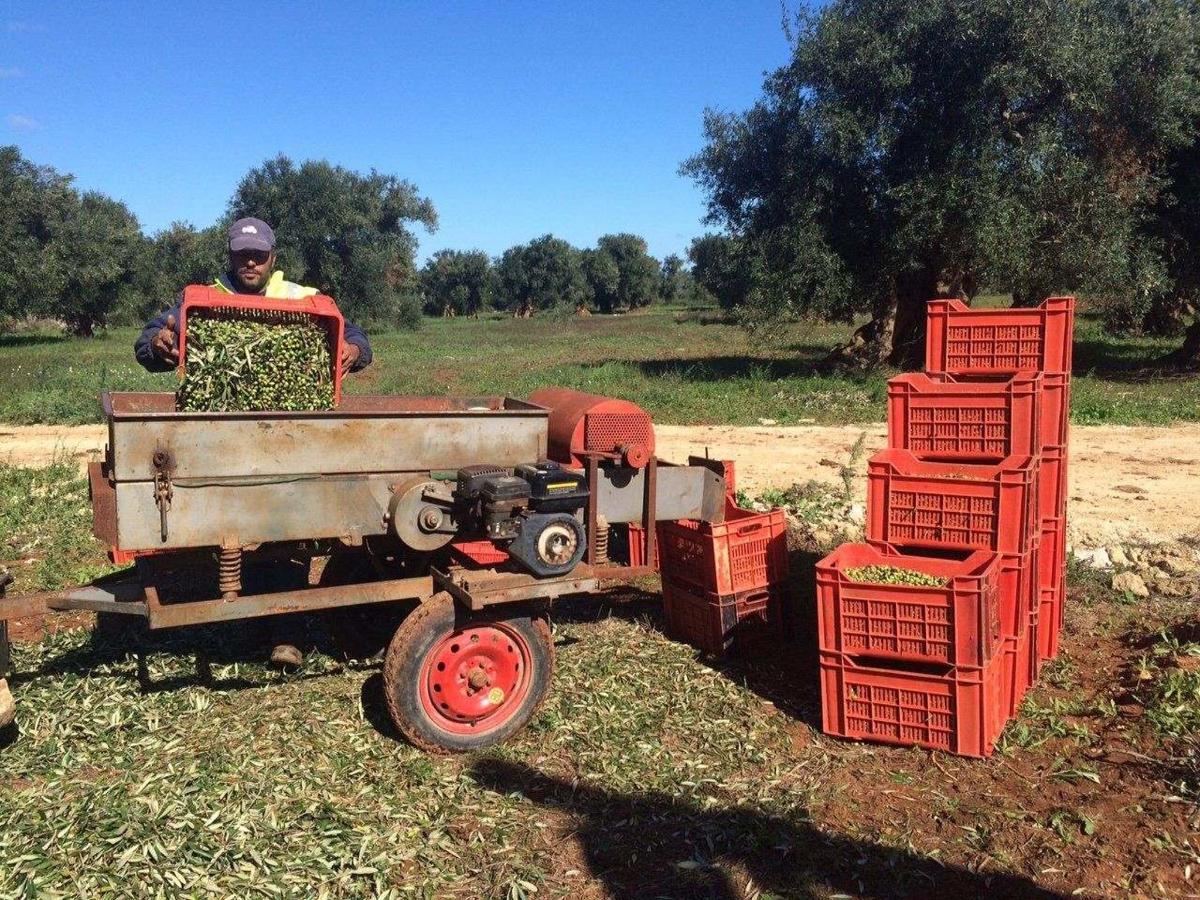 It's harvest time! 2015