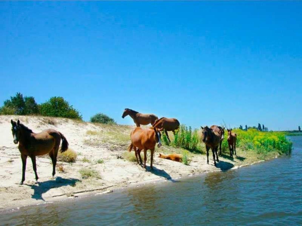 cavalos selvagens, rio a dentro tours.jpg