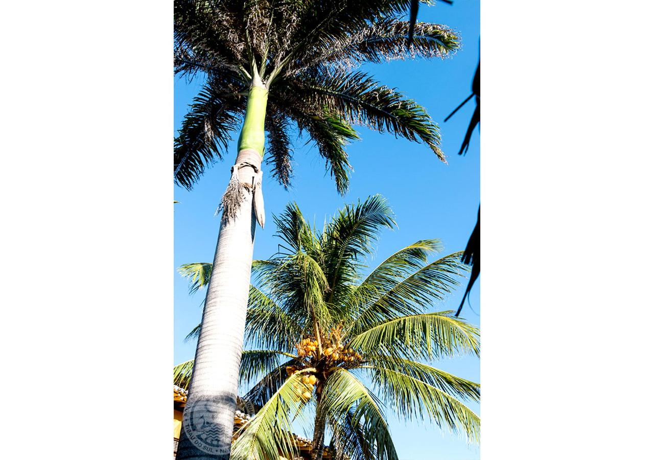 23- Garden - Coconut palm and Imperial Palm.jpg