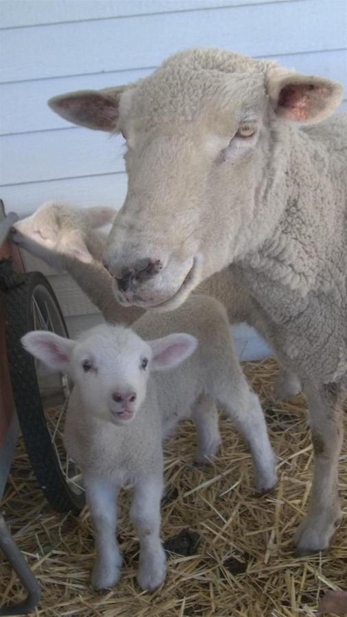 sheep-and-goats-025.JPG.1024x0.JPG