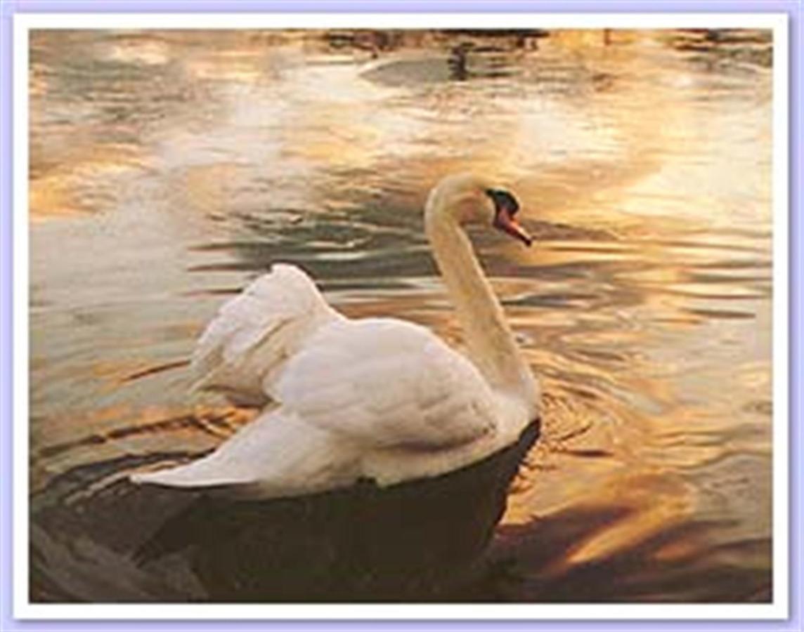 swan-2.jpg.1920x0.jpg