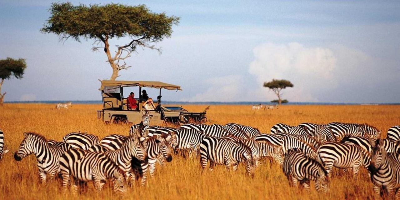 Zebras on a game drive.jpg