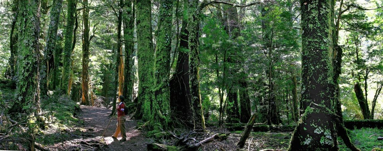 pan-bosque-Huerquehue.JPG.1024x0.JPG