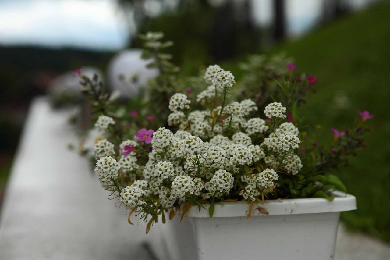 Цветы отеля