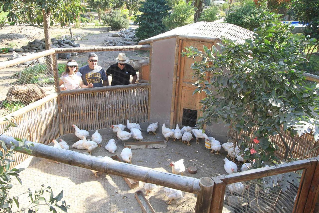 hen house.JPG
