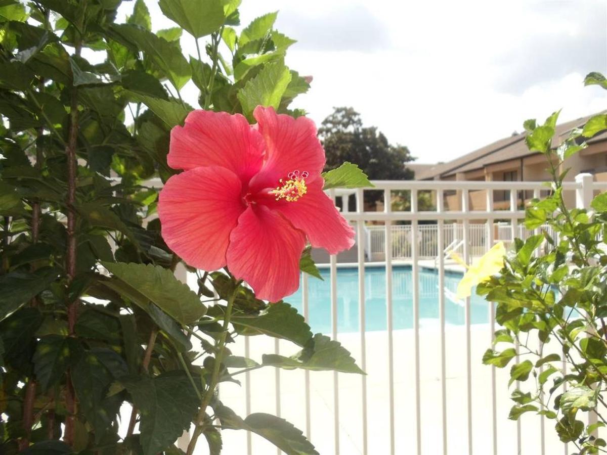 pool-flower-up-close.JPG.1024x0.JPG