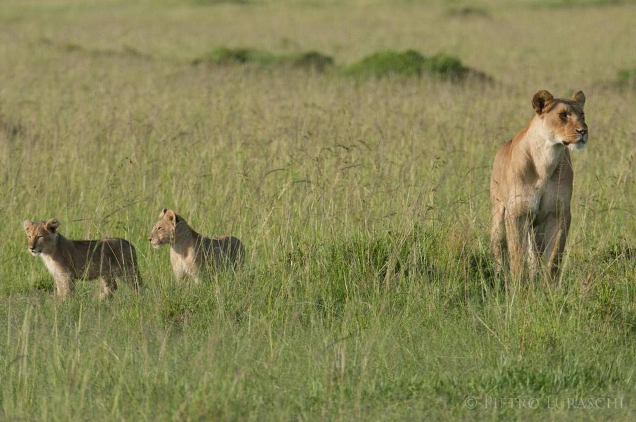 Lioness and cubs.jpg