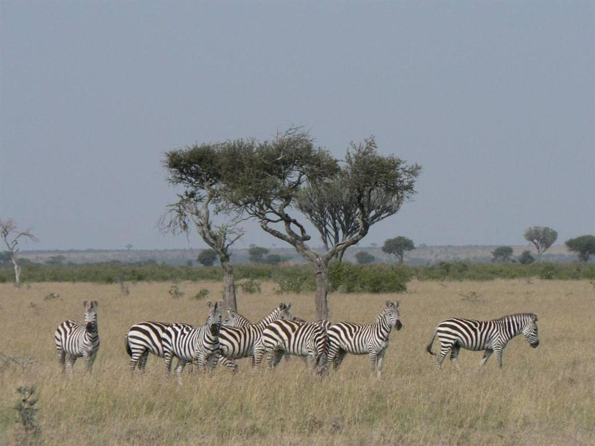 Zebra on plains.jpg