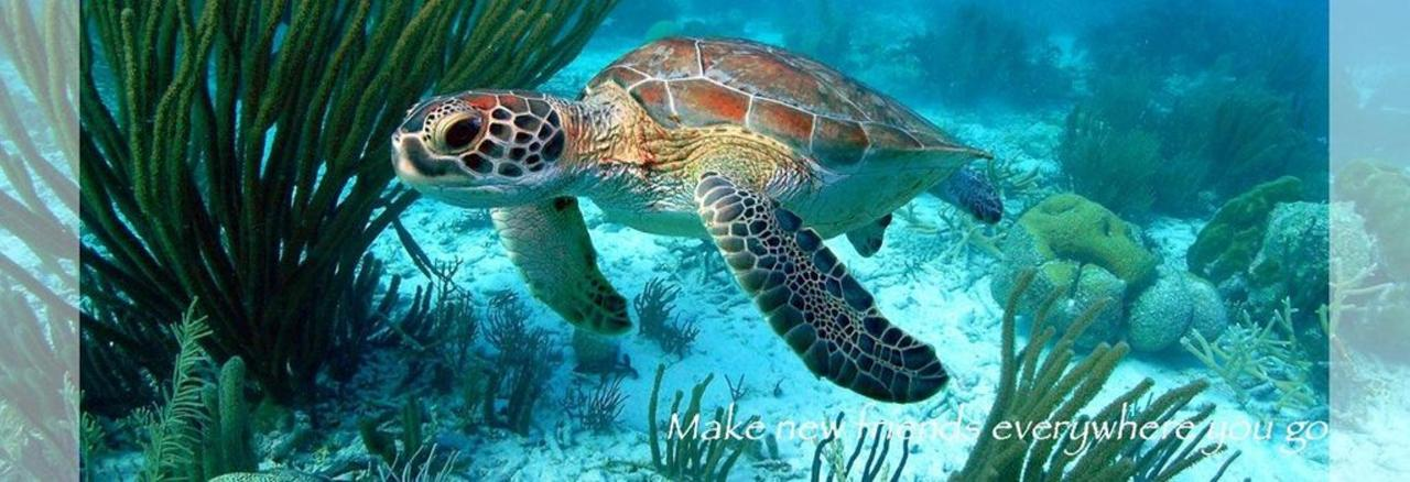 01-snorkelen-turtle.jpg.1024x0.jpg
