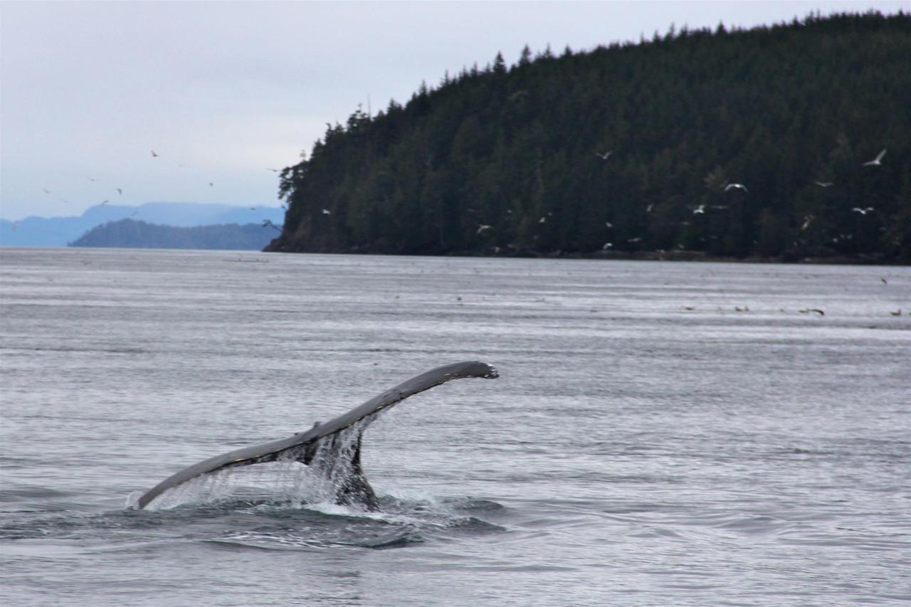 Vancouver Island Analarai Whale Tail Ocean