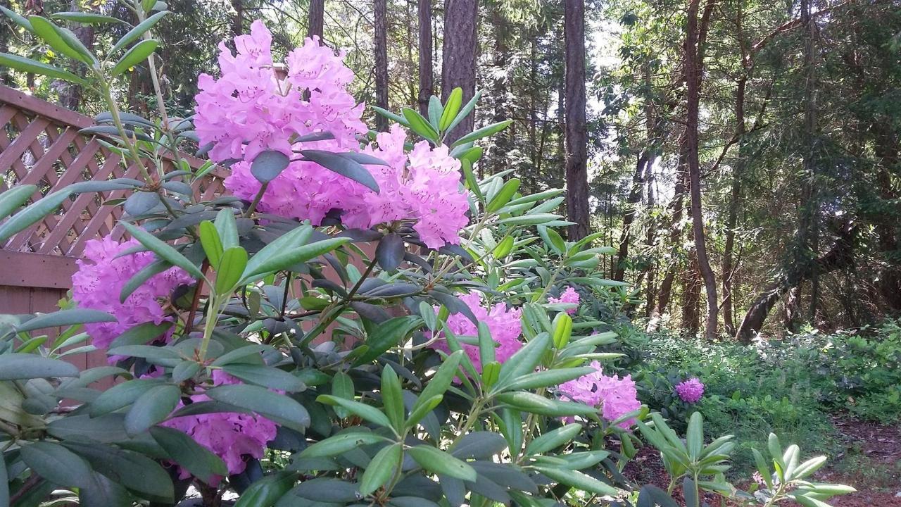 Tigh-Na-Mara Seaside Spa Resort Spring Rhododendron