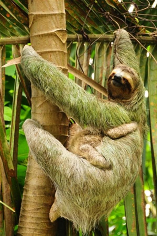 sloth-mail-chimp.JPG.1024x0.JPG