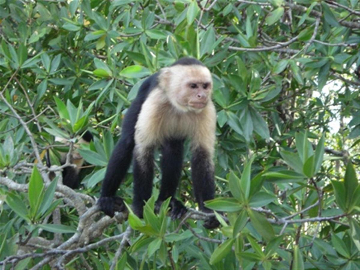 monkey-secret-sm.jpg.1024x0.jpg