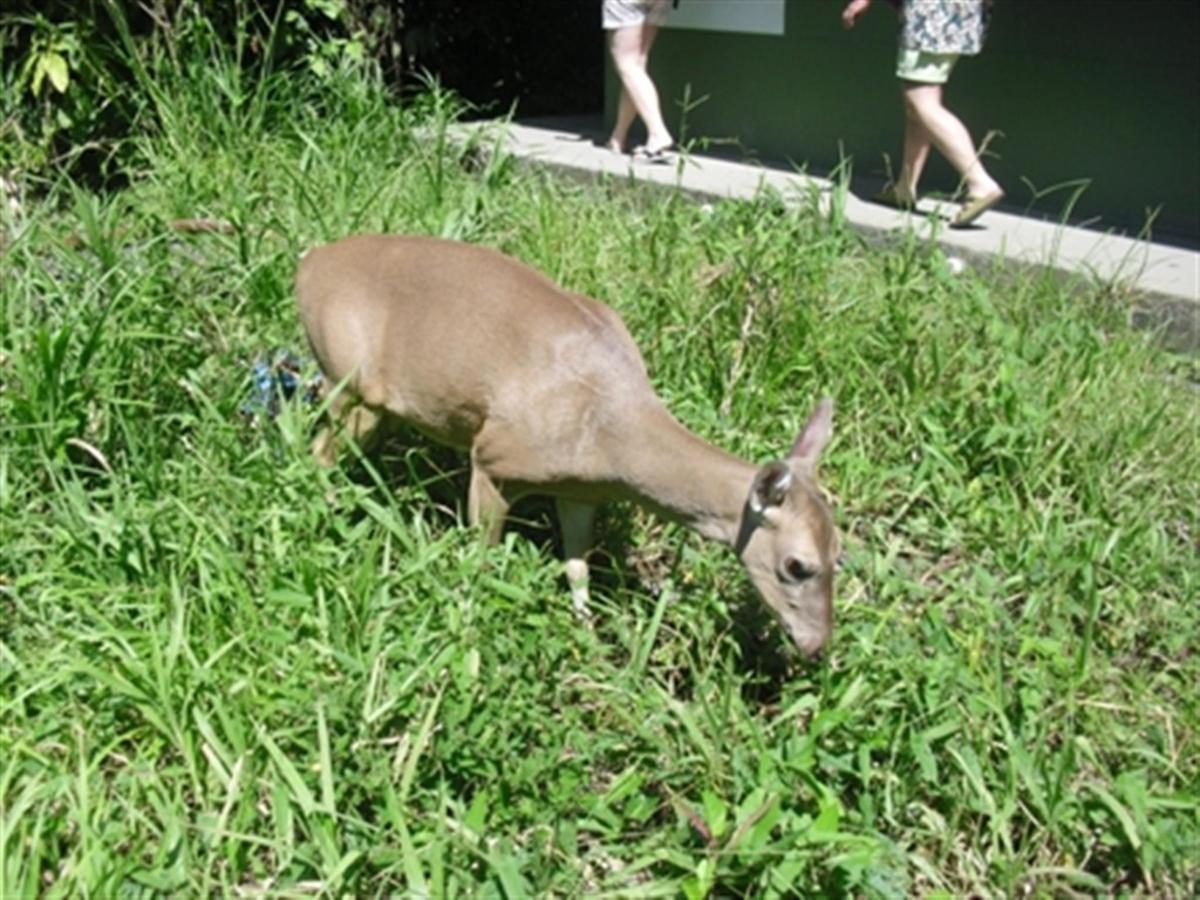 deer-sm.jpg.1024x0.jpg