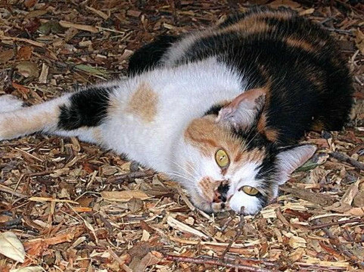 clark-cat.jpg.1920x0.jpg