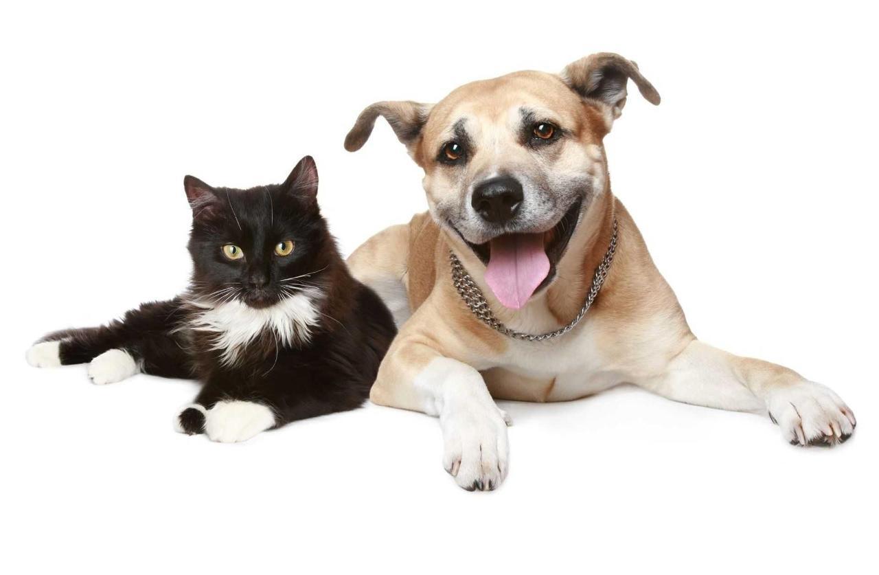 catdog1.jpg.1920x0.jpg
