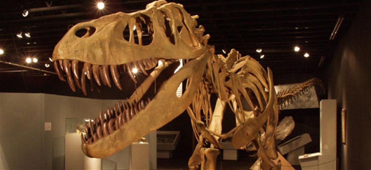 dinosaur.jpg.1920x0.jpg