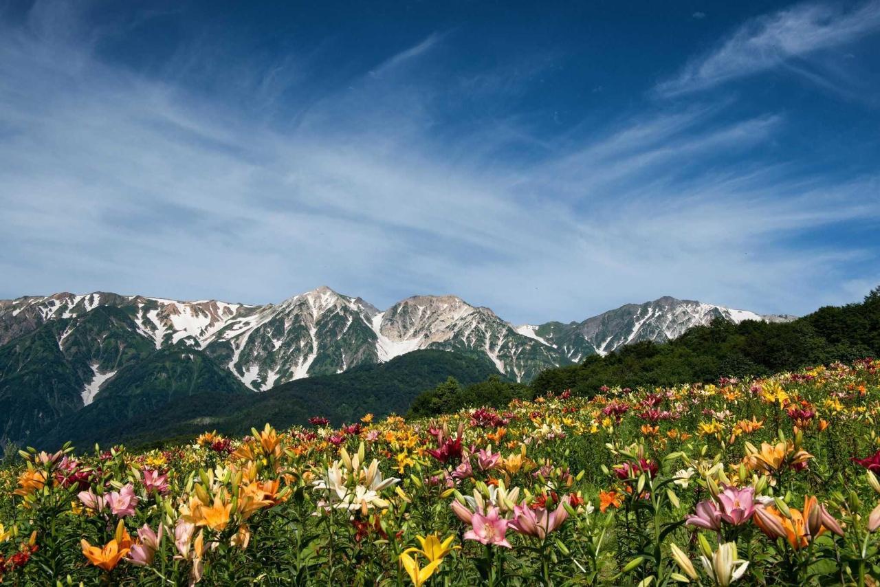夏季landscape.jpg