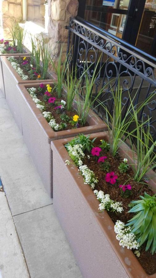 flower-planters.jpg.1920x0 (1).jpg