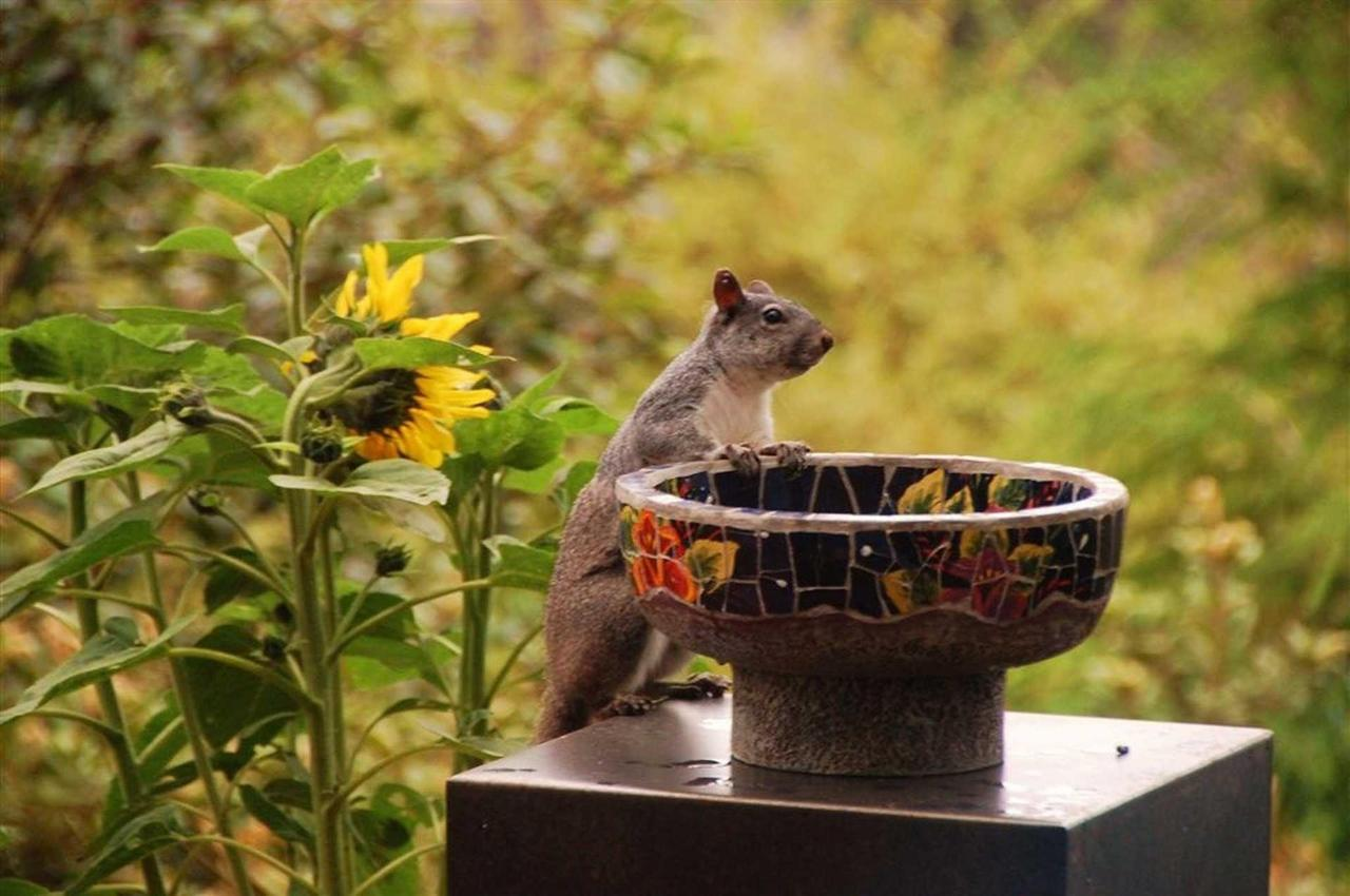 squirrel-birdbath.JPG.1920x0.JPG