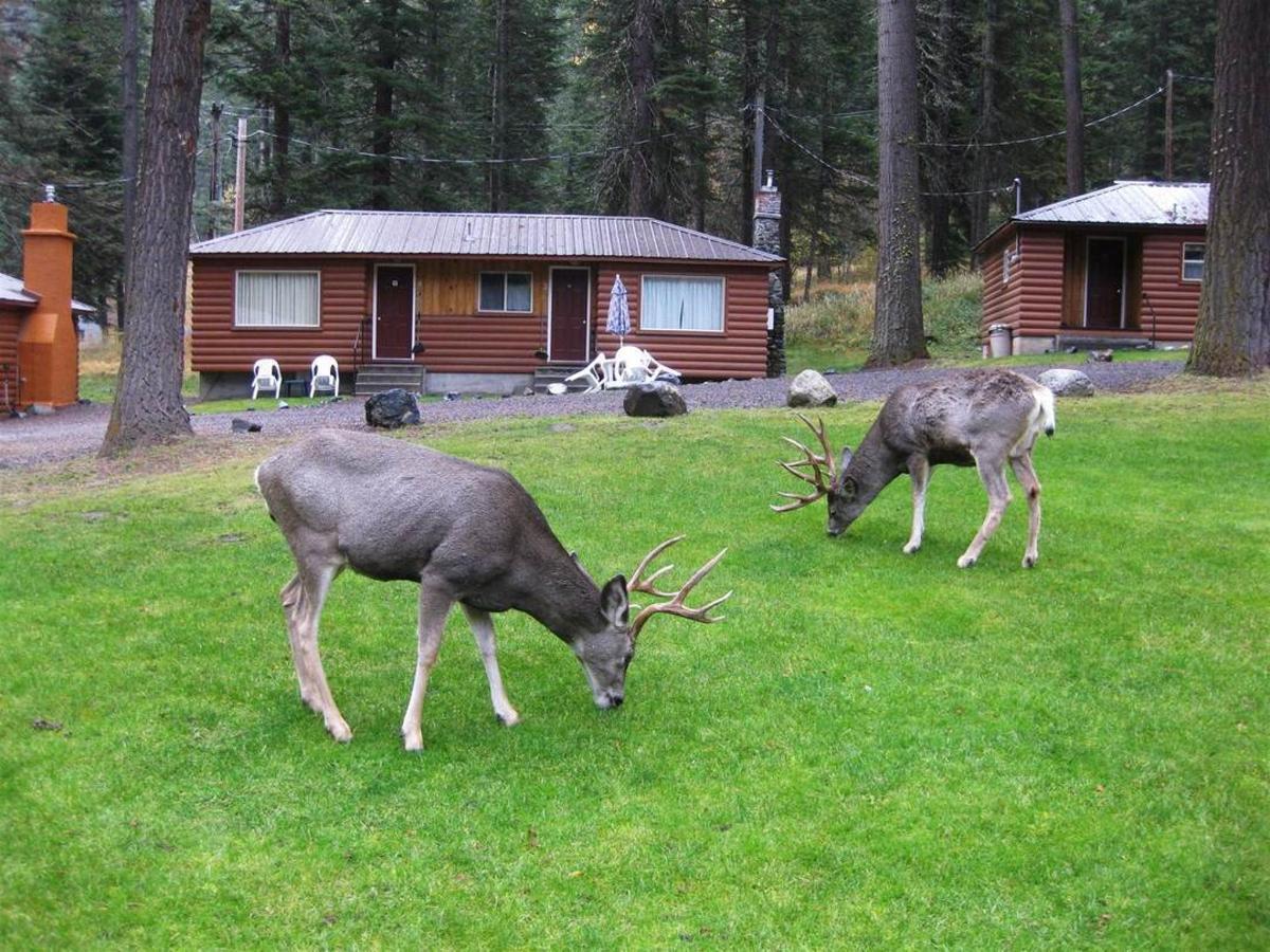 deer-on-lawn-2.JPG.1080x0.JPG