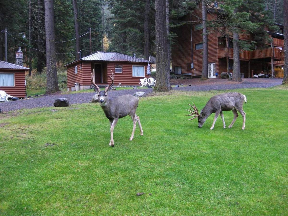 deer-on-lawn.JPG.1080x0.JPG