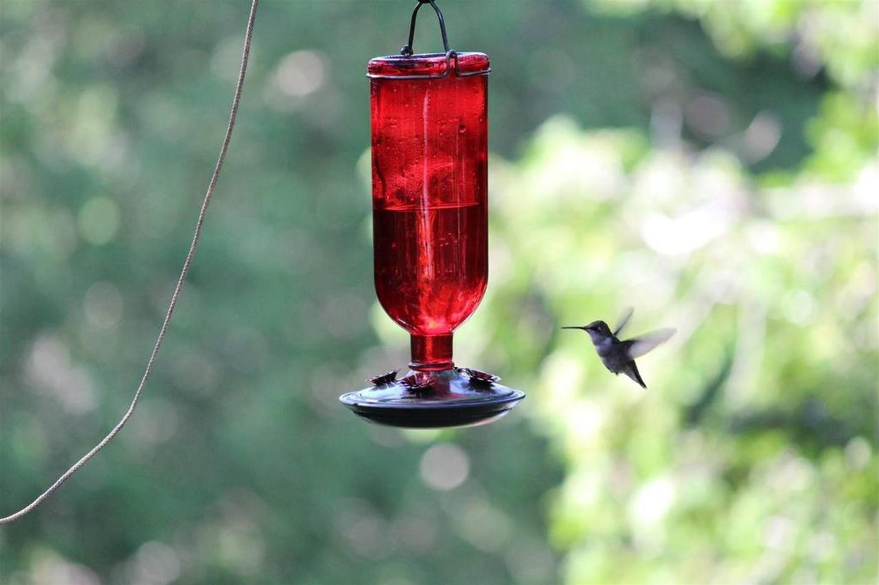 guest-image-of-a-hummingbird-approaching-feeder-at-sauble-falls-bed-and-breakfast.jpg.1024x0.jpg