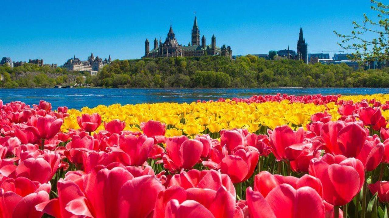 canadian-tulip-festival1.jpg.1920x0.jpg